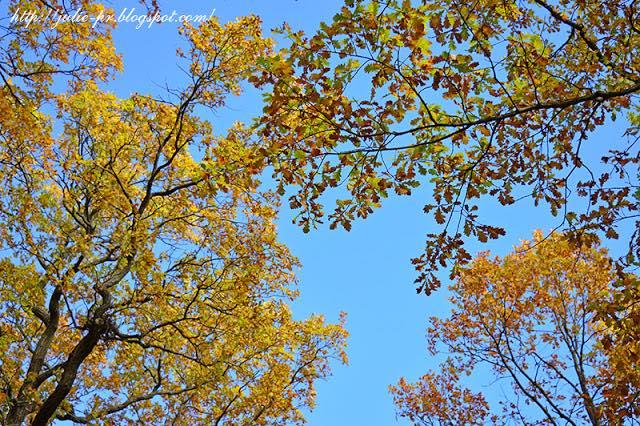 Золотая осень, Царское село