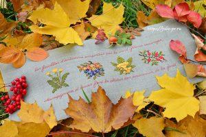 Le Bonheur Des Dames 2484 - Frise D'automne
