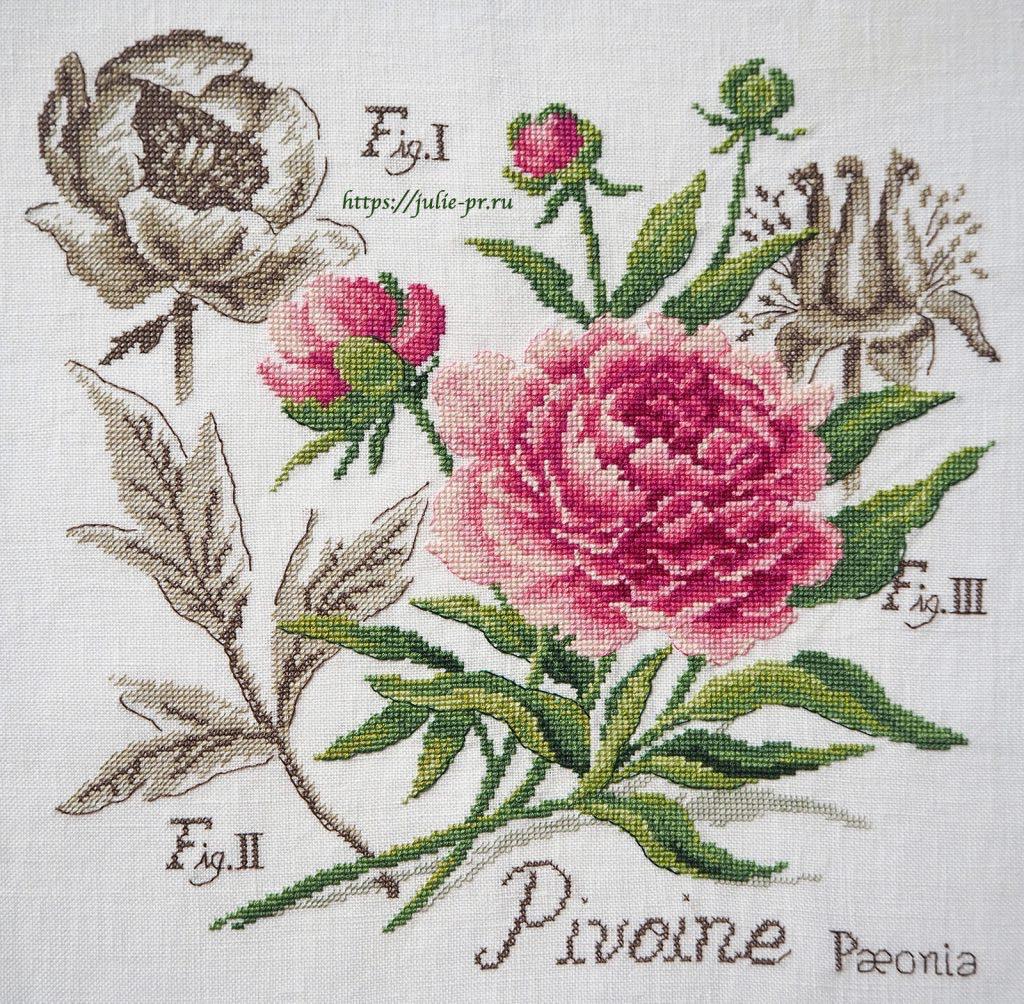 Ботаника пион Veronique Enginger, Les brodeuses parisiennes, парижские вышивальщицы, вышивка крестом