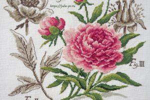Ботаника пион Veronique Enginger, Les Brodeuses Parisiennes, парижские вышивальщицы