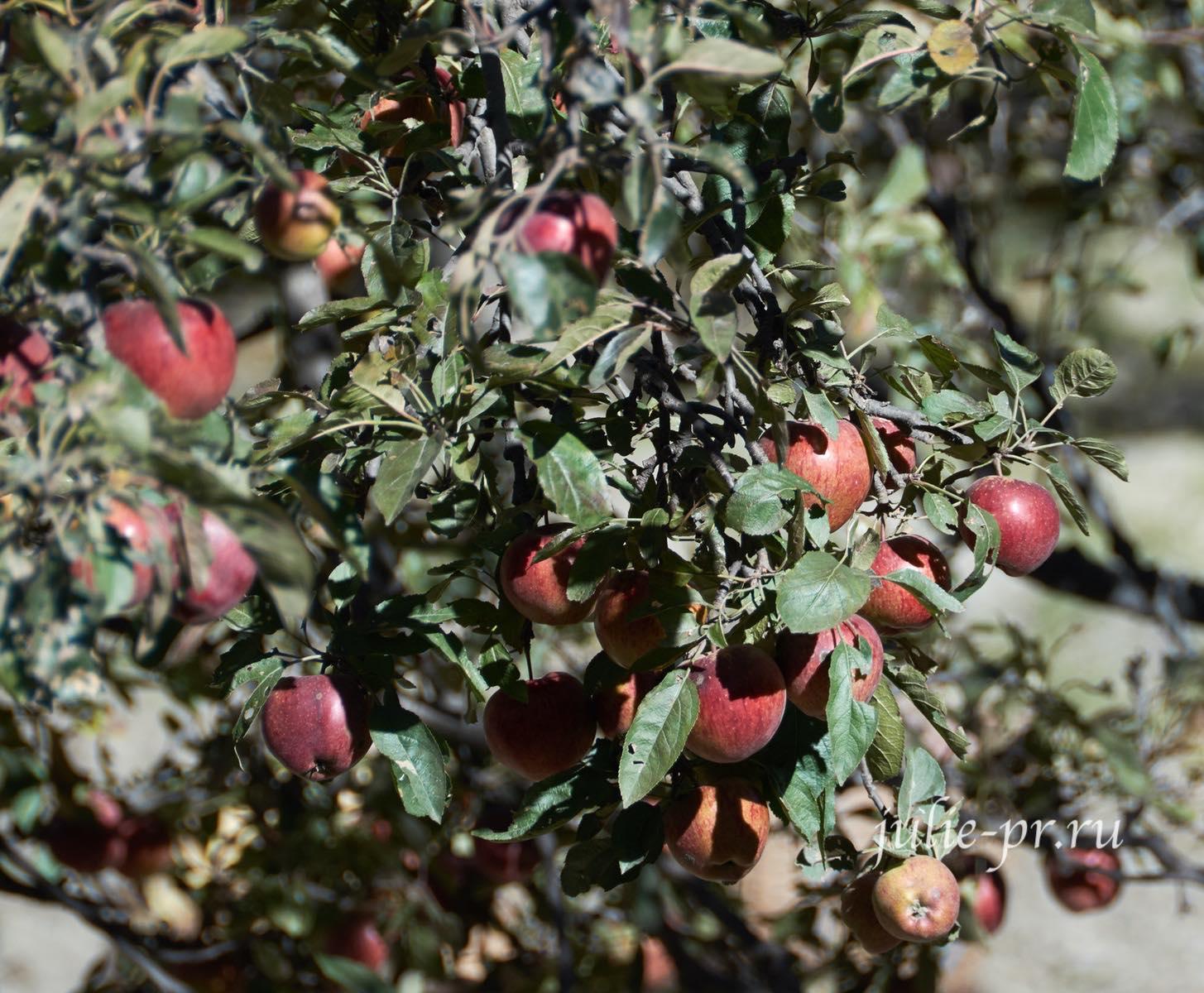 Непал, Трек вокруг Аннапурны, яблоневые сады