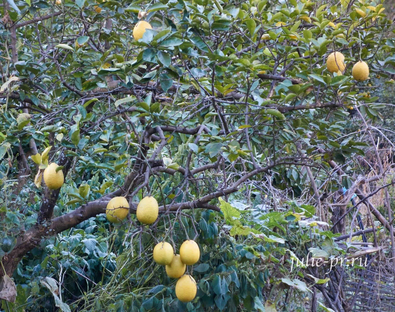 Непал, Трек вокруг Аннапурны, лимон