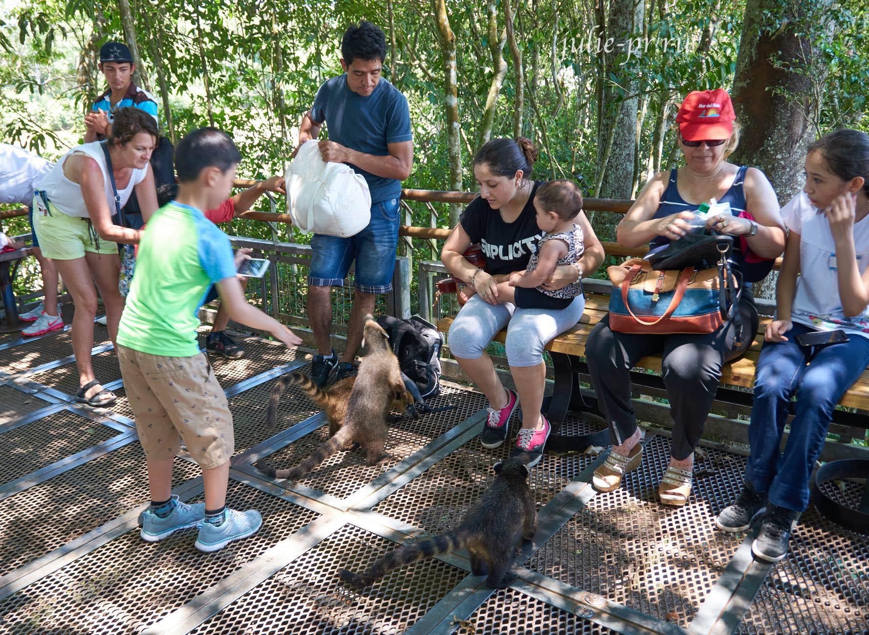 Аргентина, Игуасу, туристы и коати