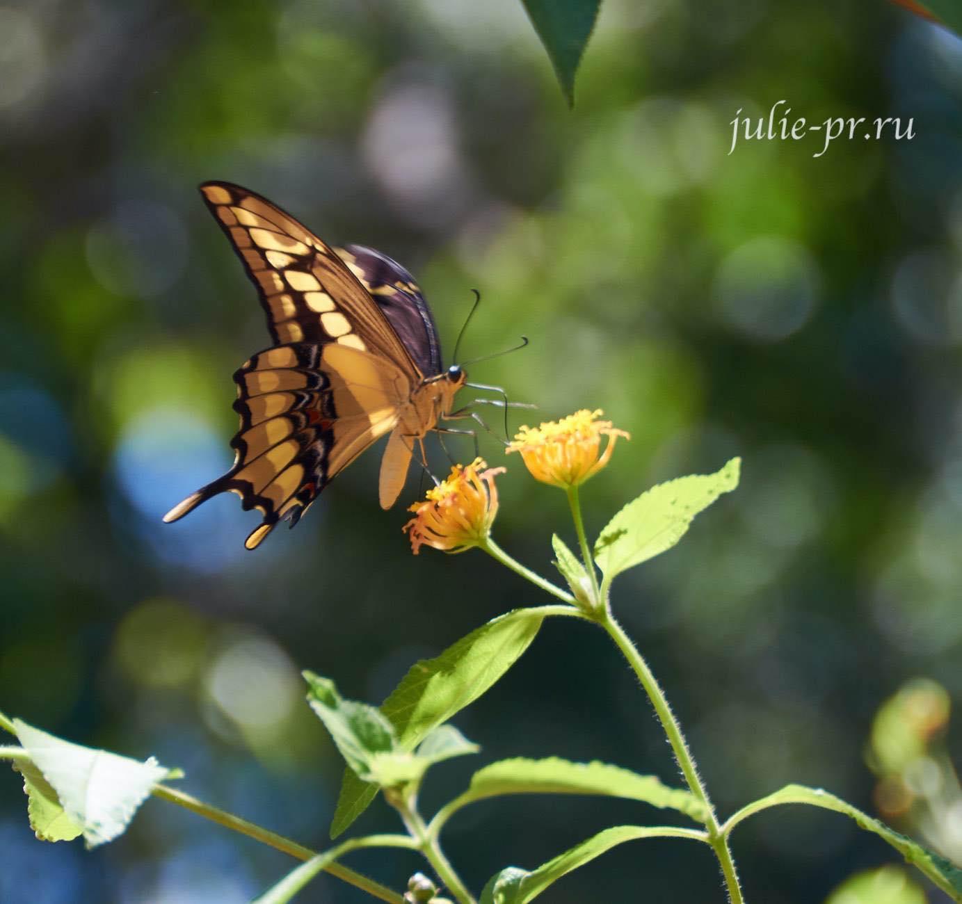 Аргентина, Игуасу, бабочка