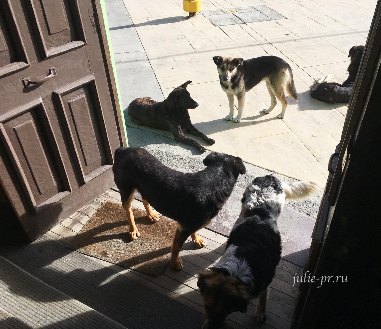Чили, Патагония, Пуэрто-Наталес, собаки