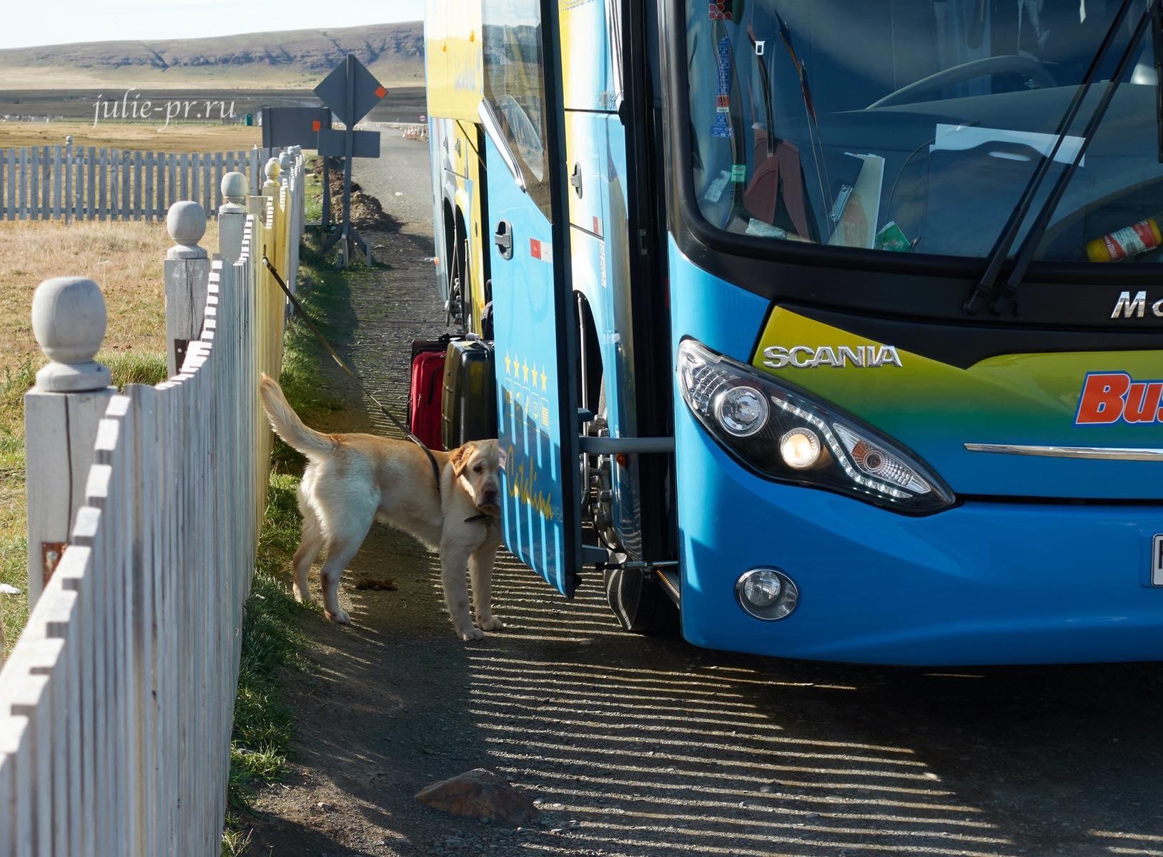 Чили, Патагония, граница, служебная собака
