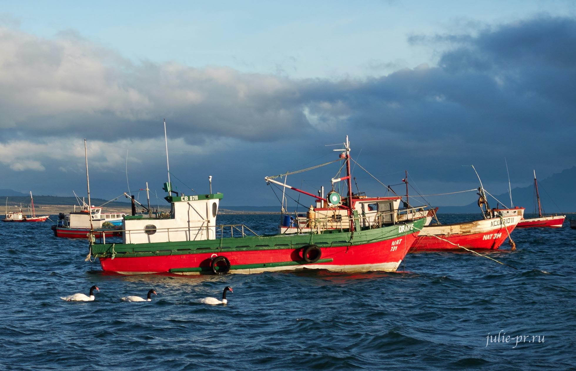Чили, Патагония, Пуэрто-Наталес, лодки, лебеди