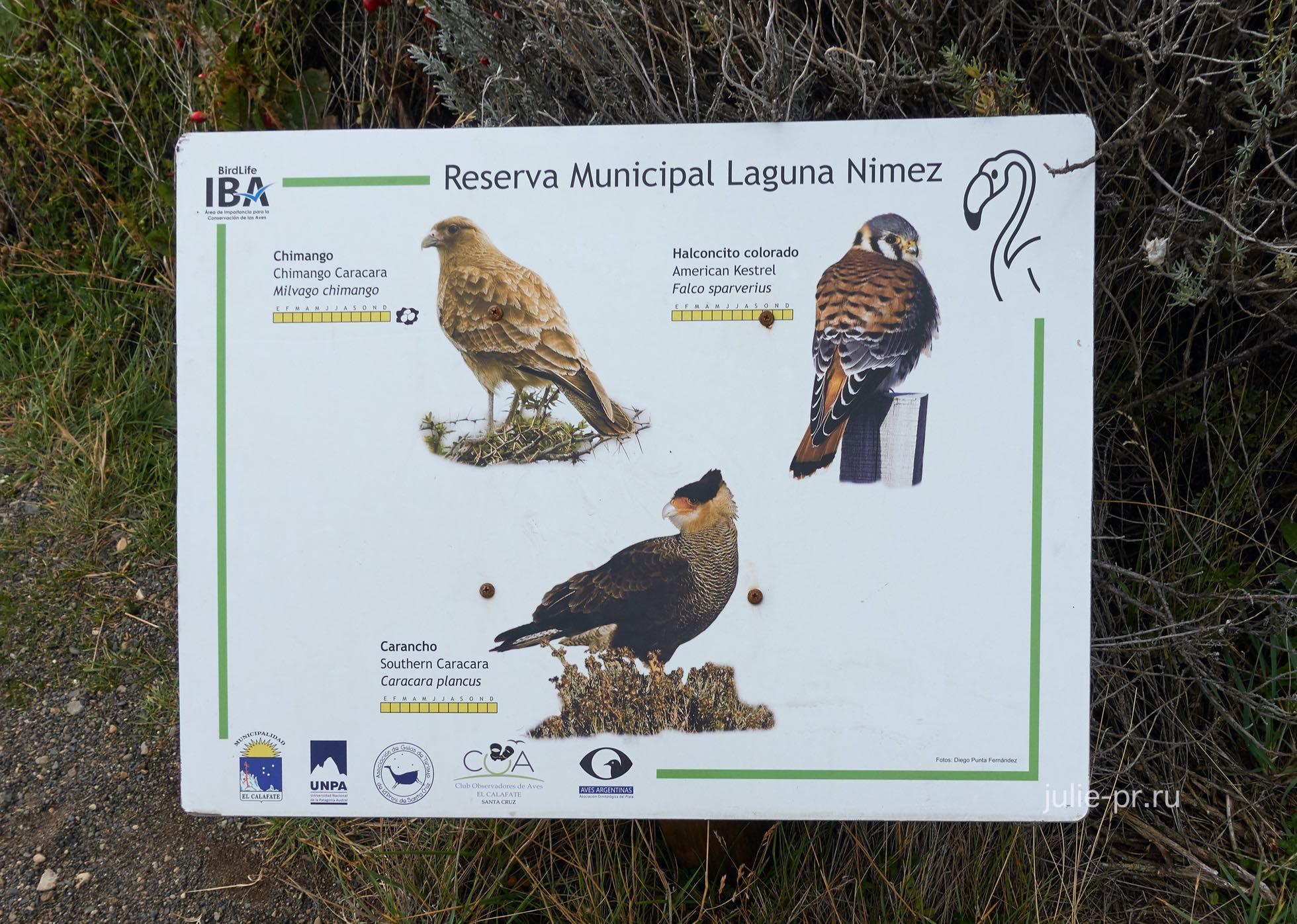 Аргентина, Патагония, Эль-Калафате, лагуна Нимез, птицы