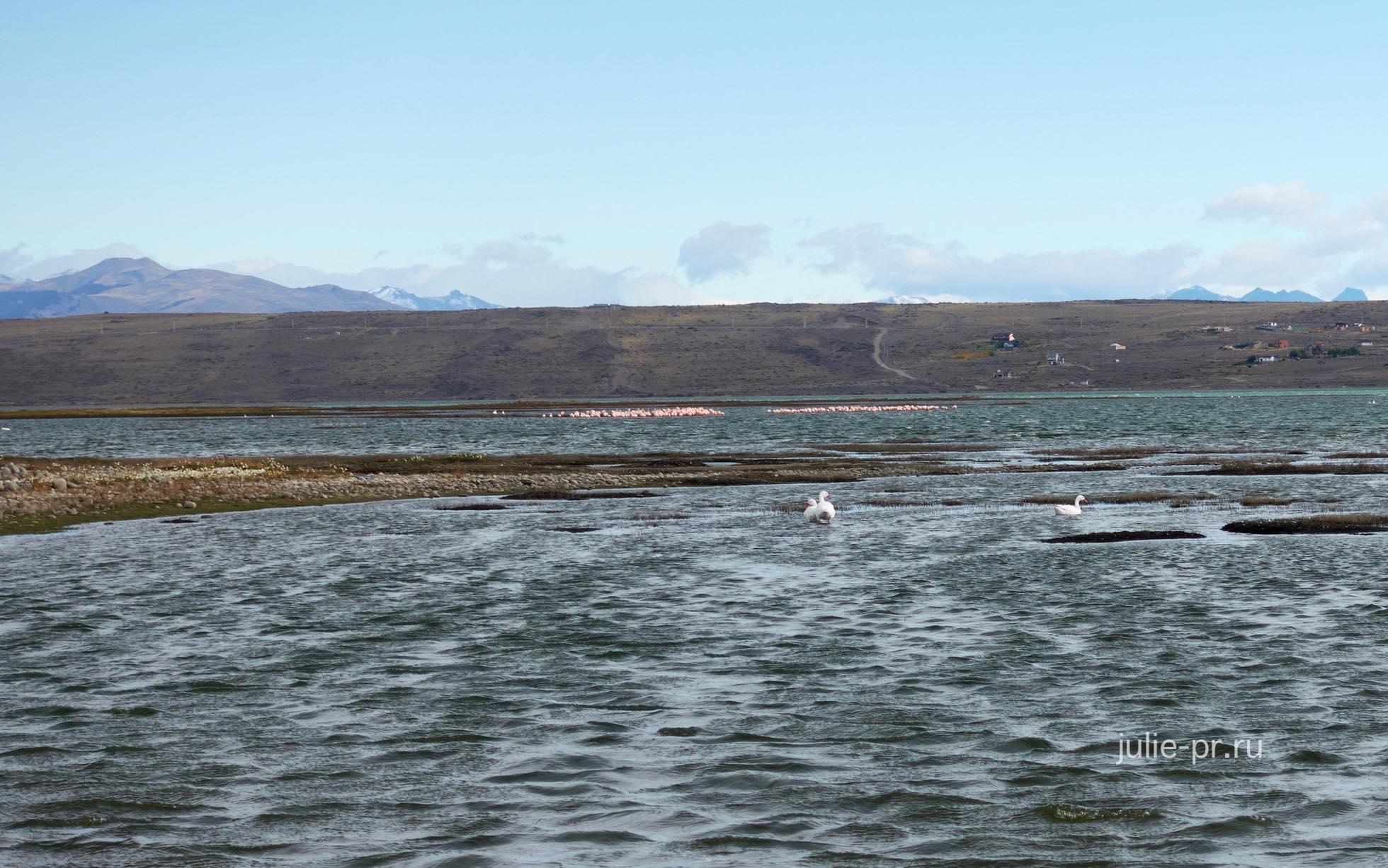 Аргентина, Патагония, Эль-Калафате, озеро Архентино, розовые фламинго