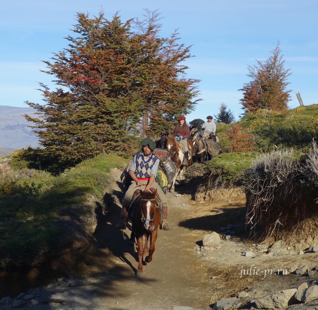 Чили, Патагония, Торрес-дель-Пайне, лошади