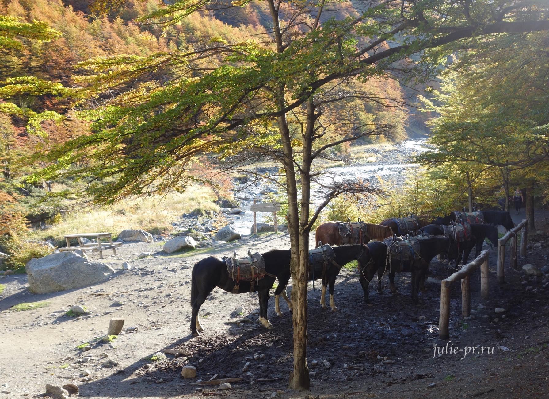 Чили, Патагония, Торрес-дель-Пайне, Refugio Chileno, лошади