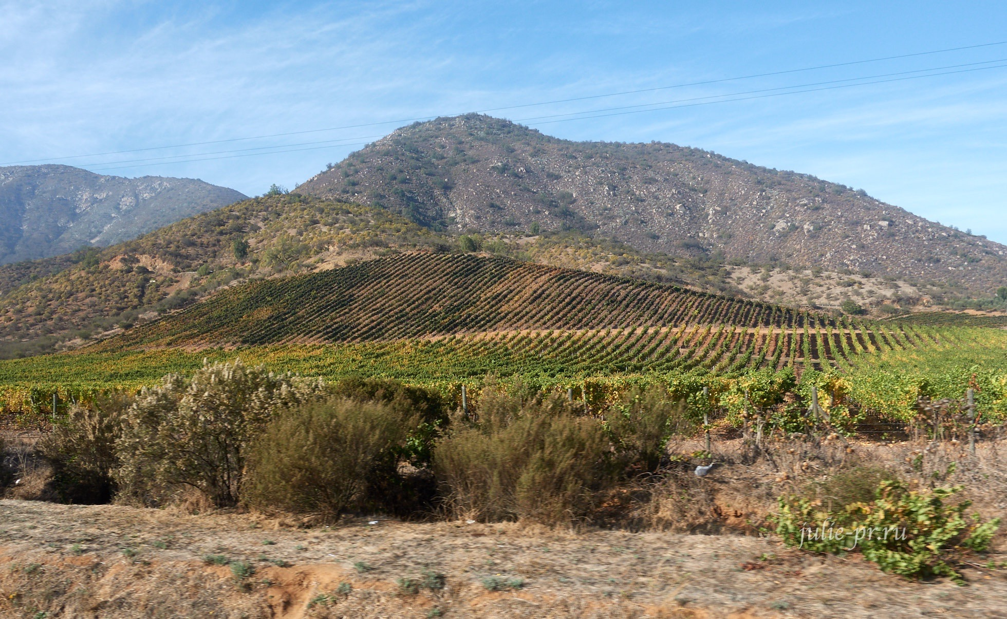 Чили, виноградники