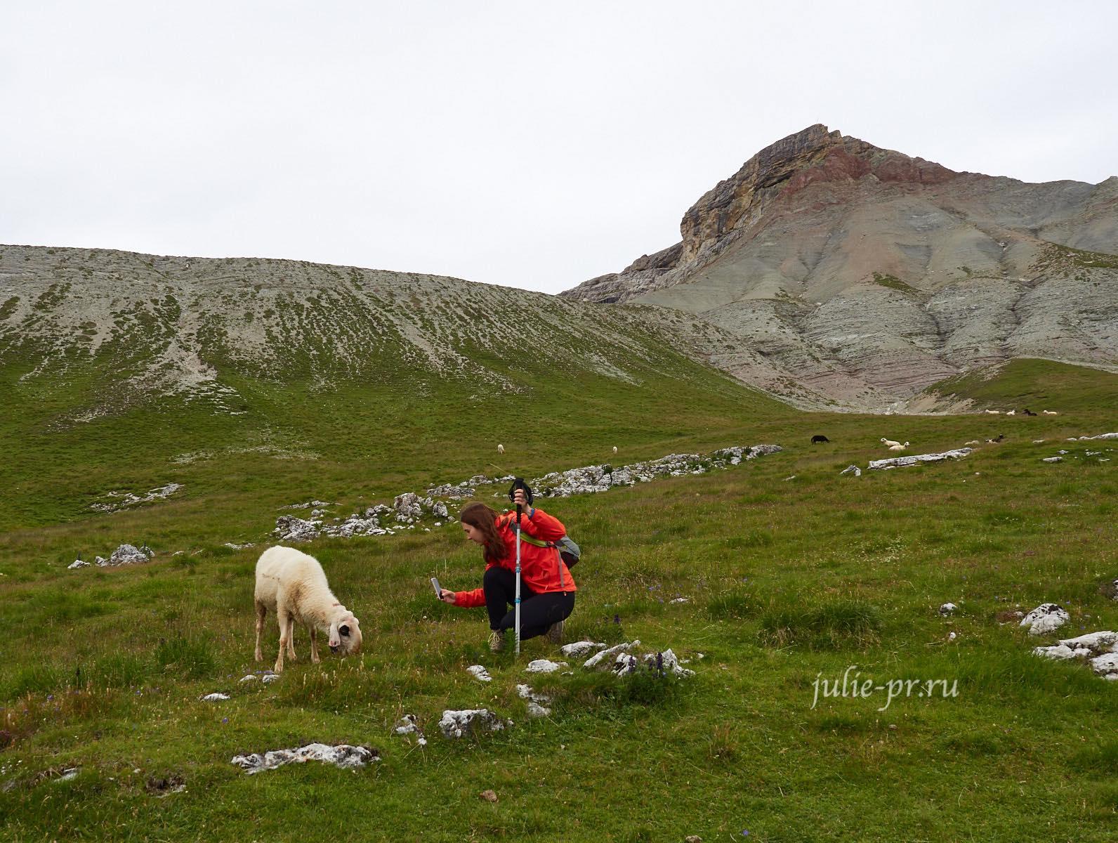 Италия, Альпы, Доломиты, Овцы
