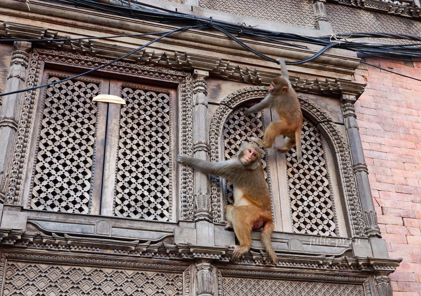 Непал, Катманду, Сваямбунатх, обезьяна