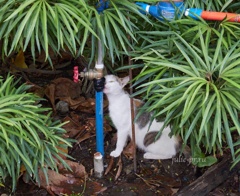 Филиппины, Манила, кот