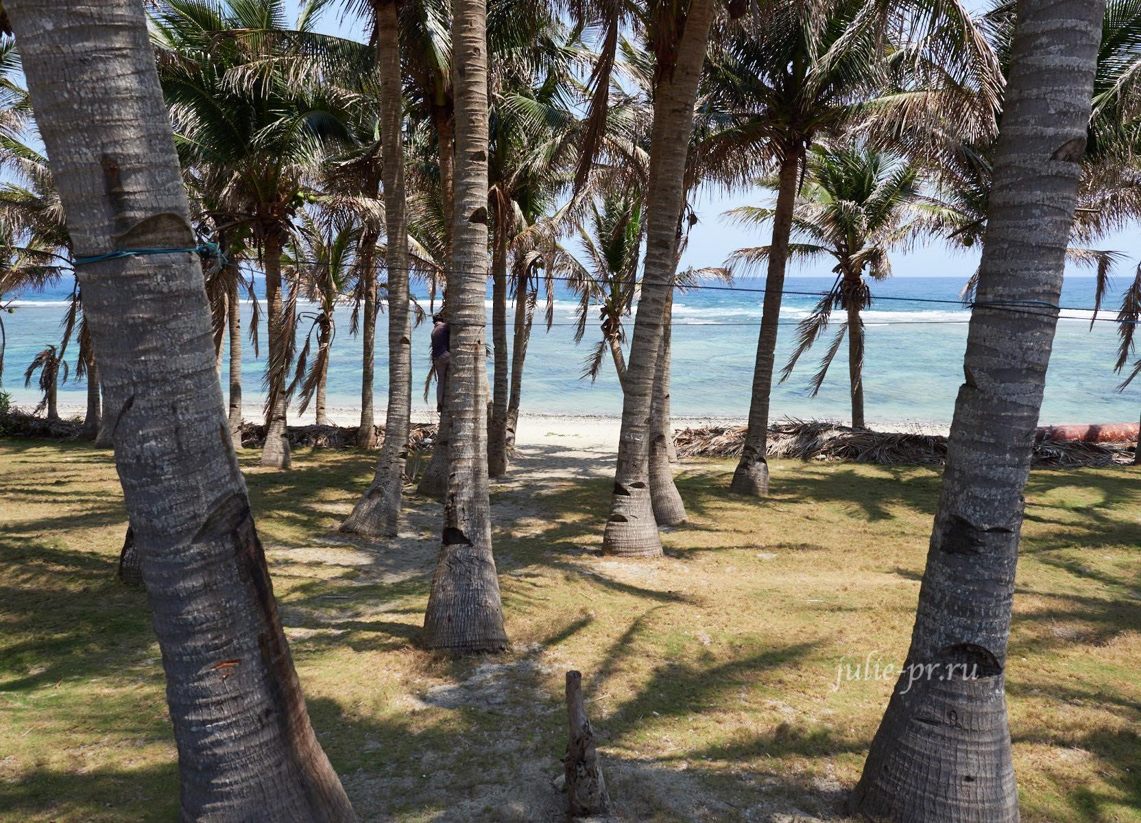 Филиппины, острова Батанес, пальмы