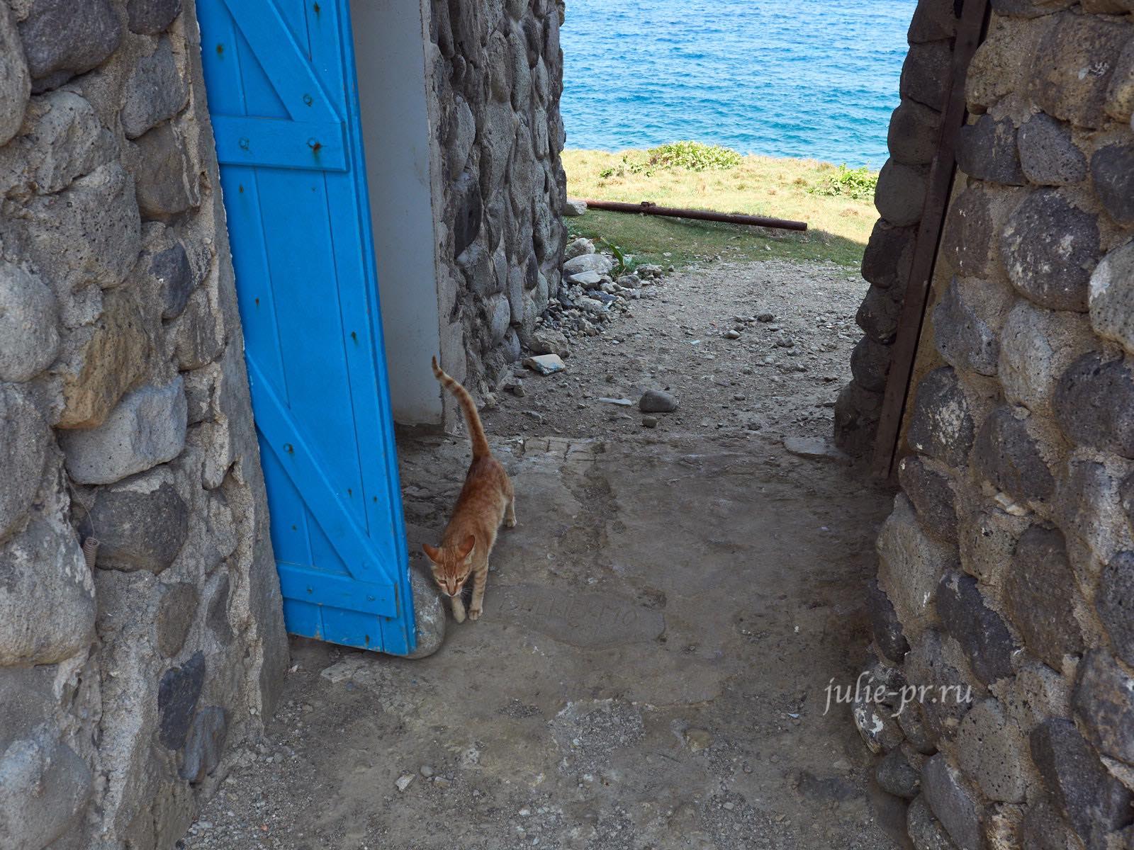 Филиппины, острова Батанес, кот