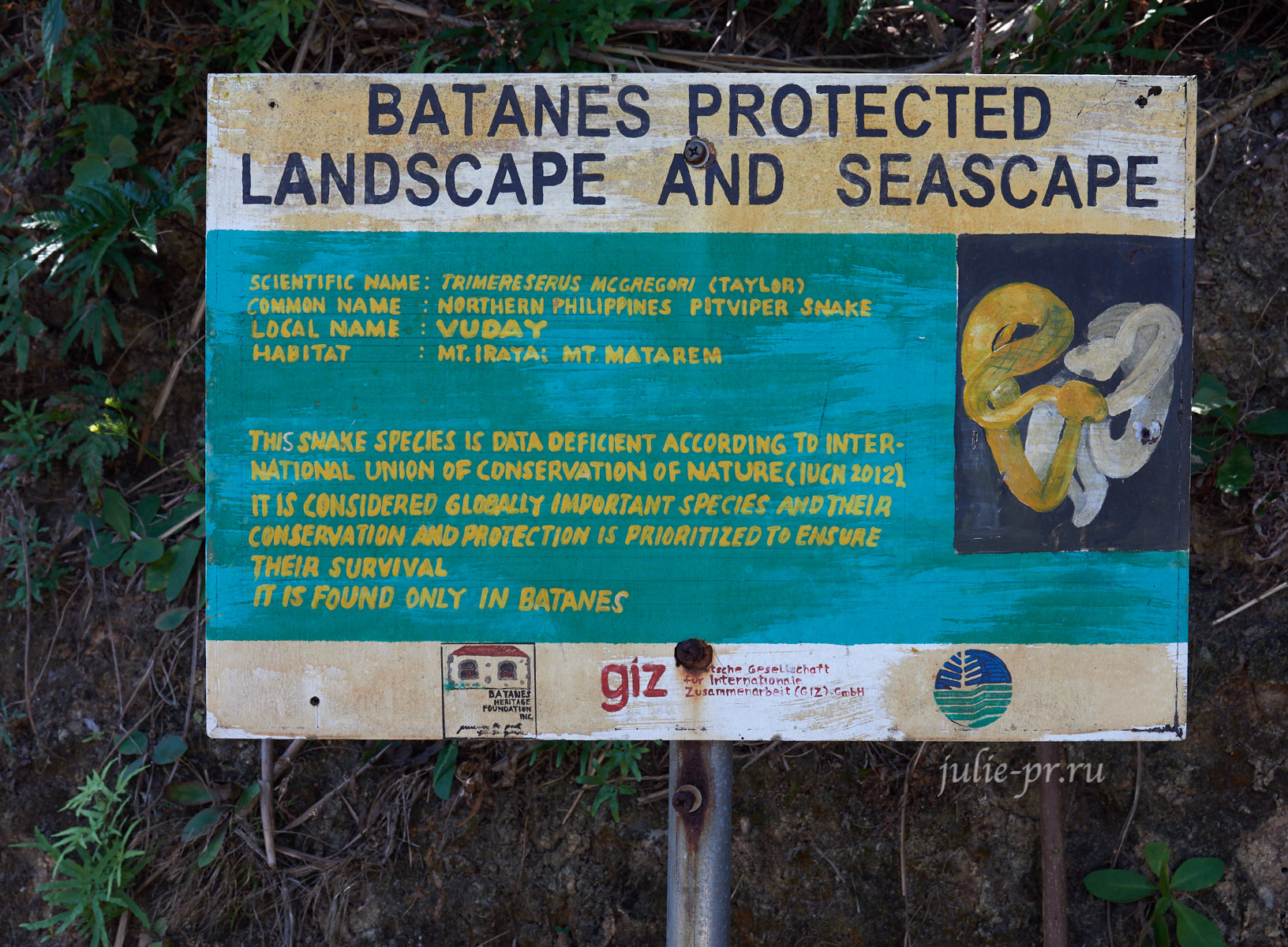 Филиппины, острова Батанес, Northern Philippines Pitviper