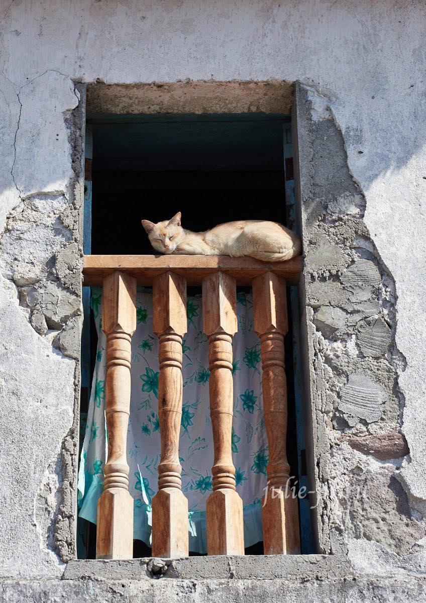 Филиппины, острова Батанес, кот на окне