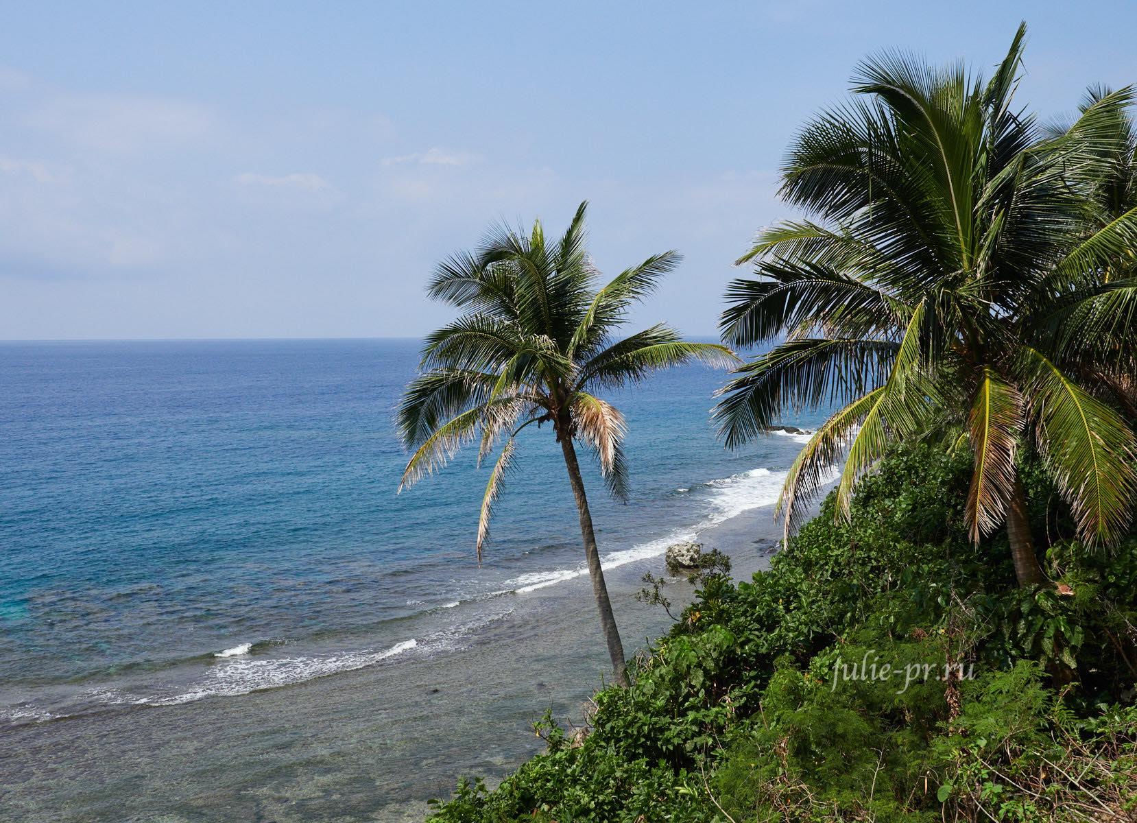 Филиппины, острова Батанес, пальмы на побережье