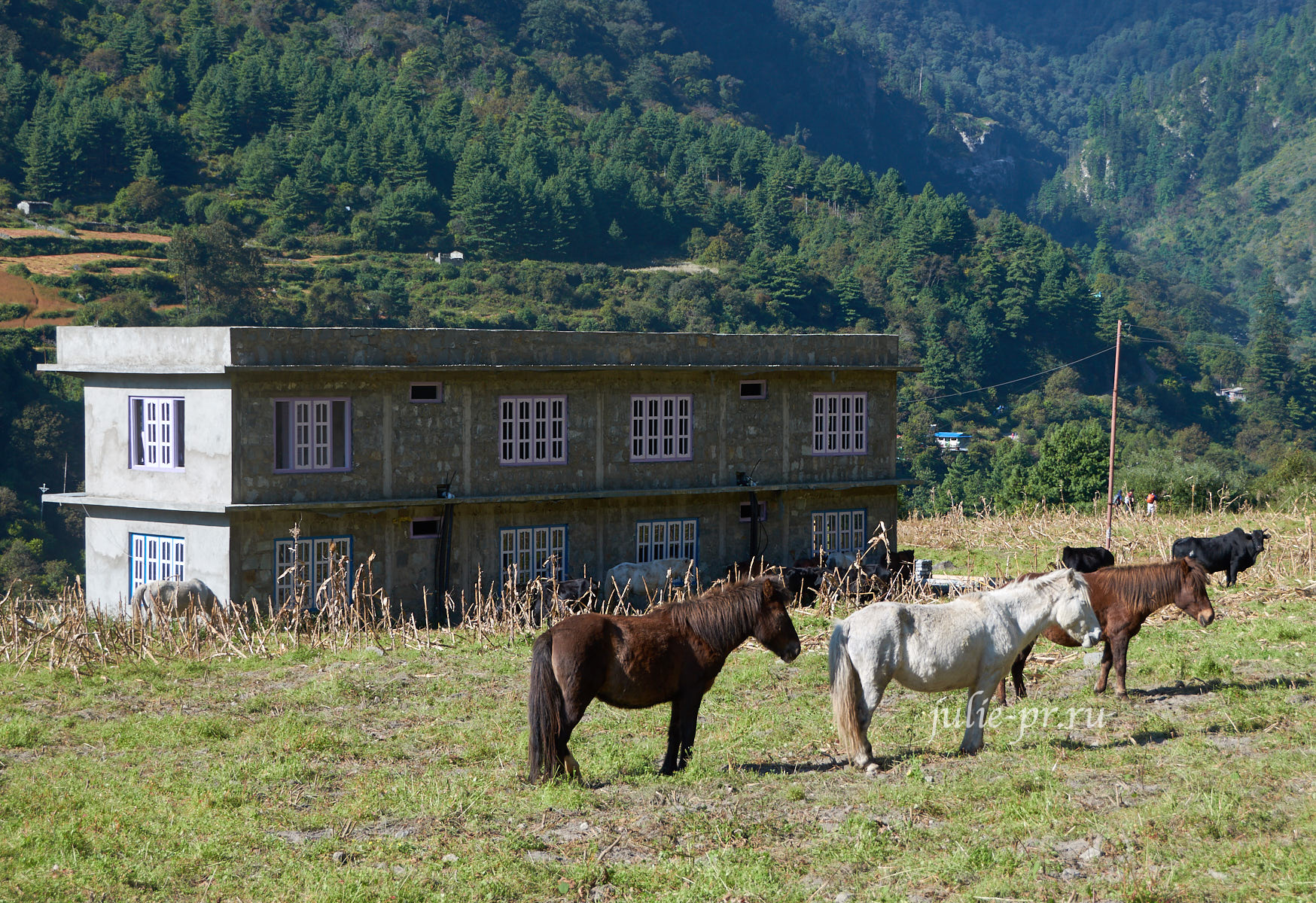 Непал, Трек вокруг Аннапурны, Лошади