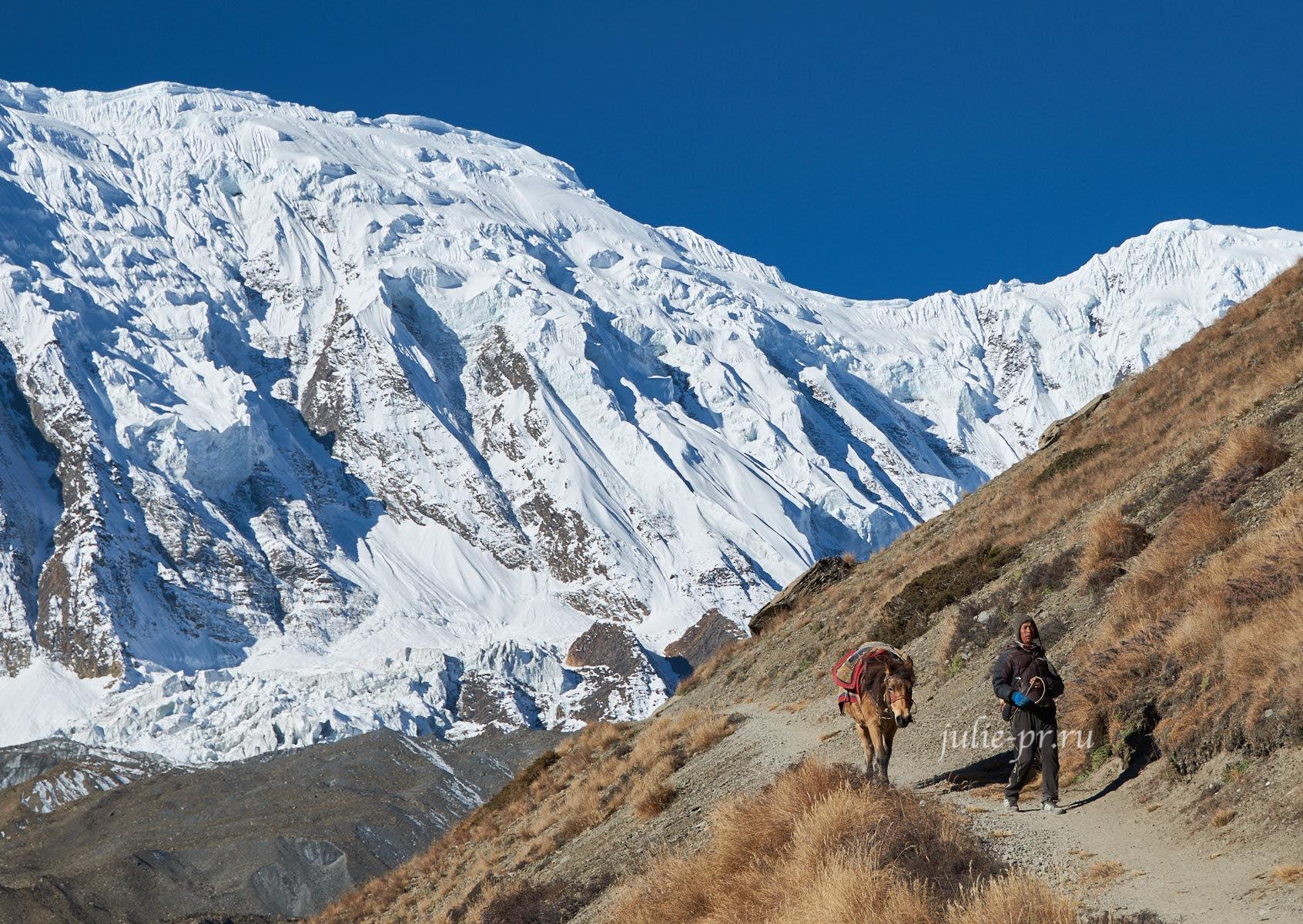 Непал, Тиличо, Большой барьер, Человек с лошадью