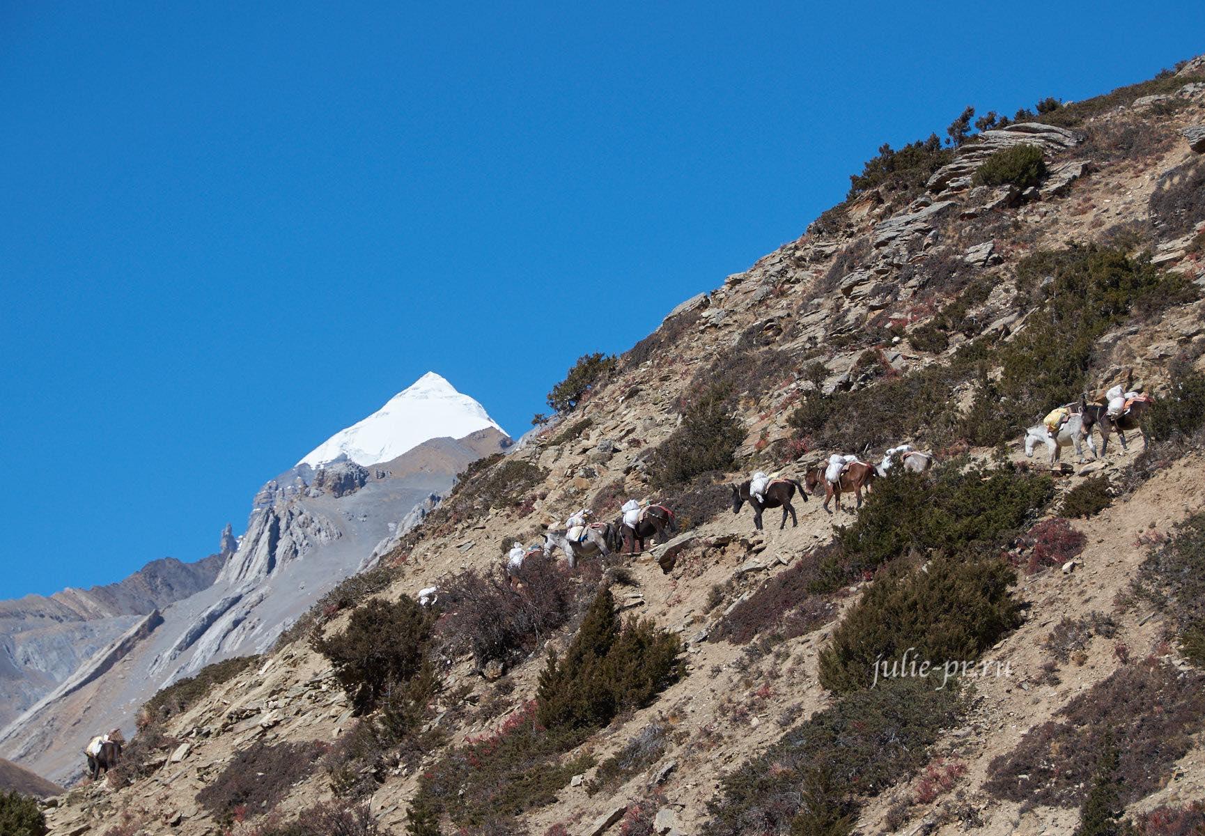 Непал. Трек вокруг Аннапурны. Караван