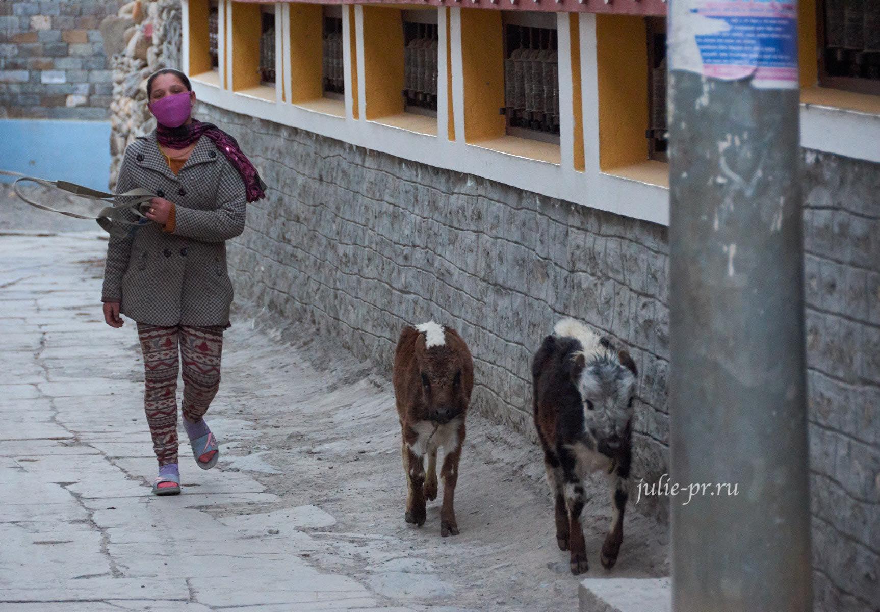Непал, Кагбени, девушка с телятами