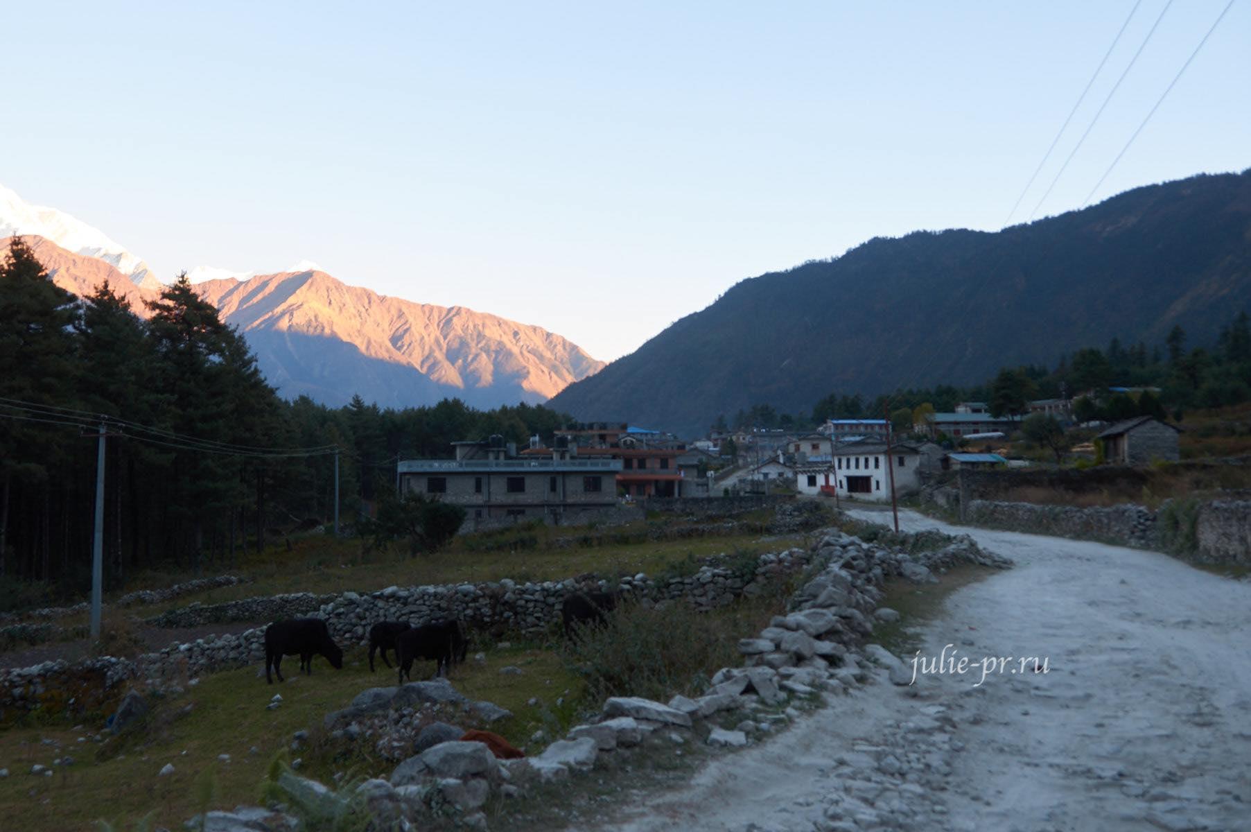 Непал, Трек вокруг Аннапурны, Деревня Калопани