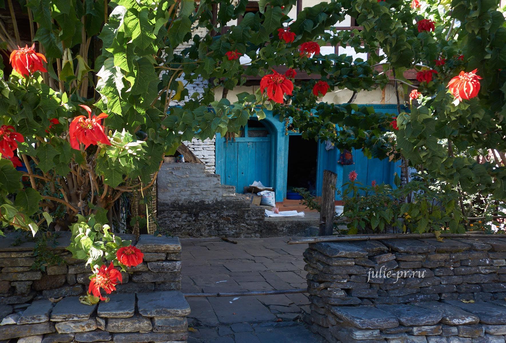 Непал, Трек вокруг Аннапурны, Дана, Цветы