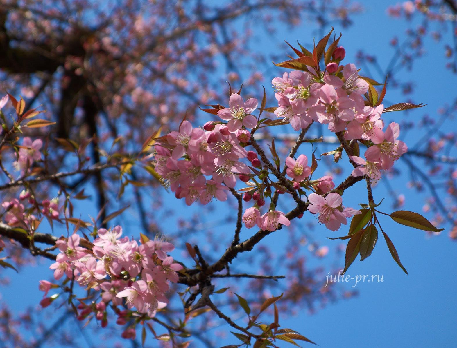 Непал, Пун-Хилл трек, Цветы