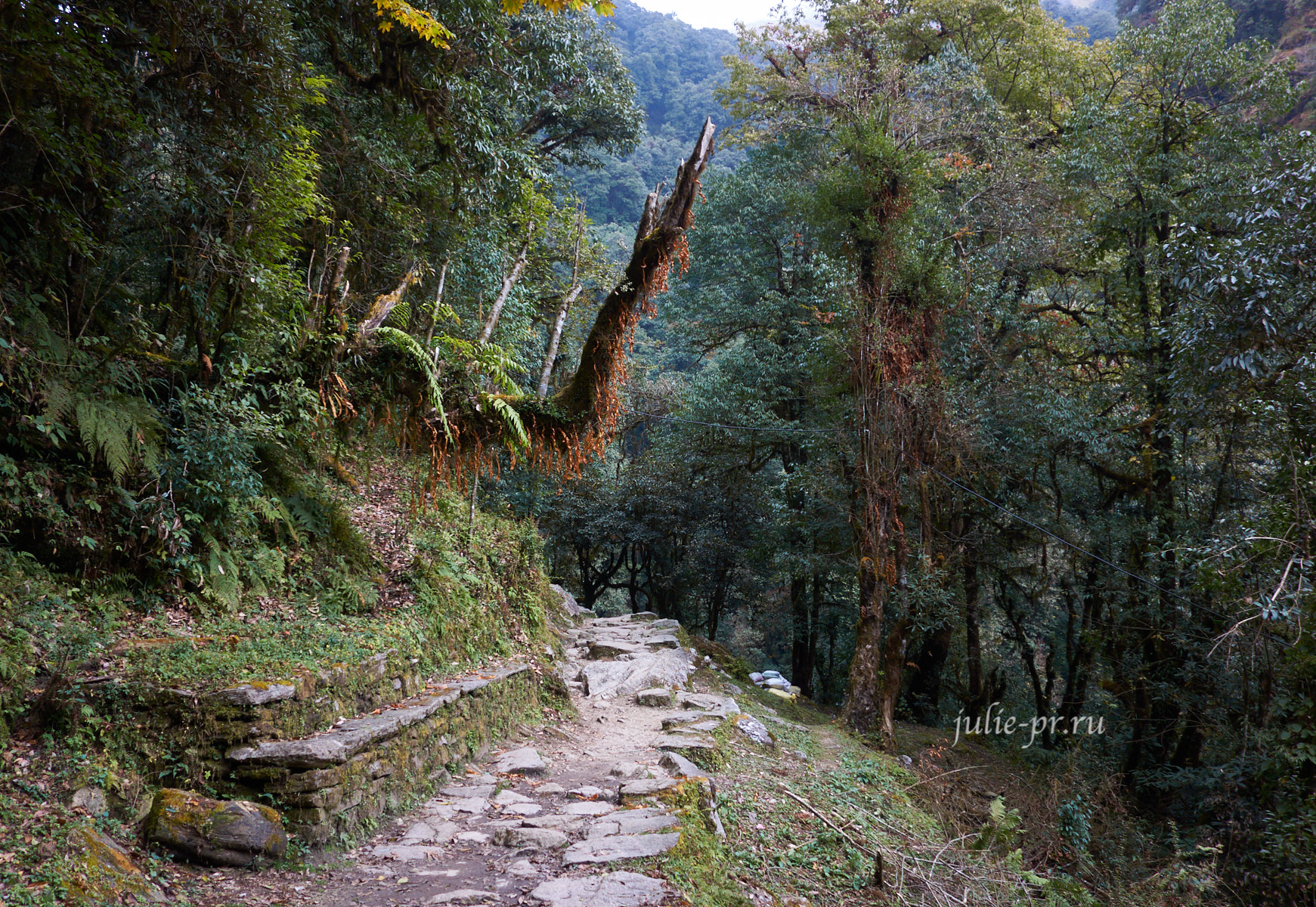 Непал, Пун-Хилл трек, Тропа в лесу