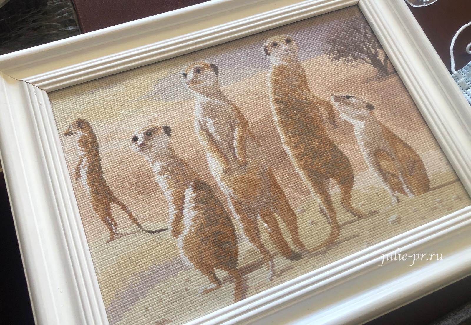 Meercats, Сурикаты, вышивка крестом, Heritage, John Clayton, выставка Грани Джона Клейтона
