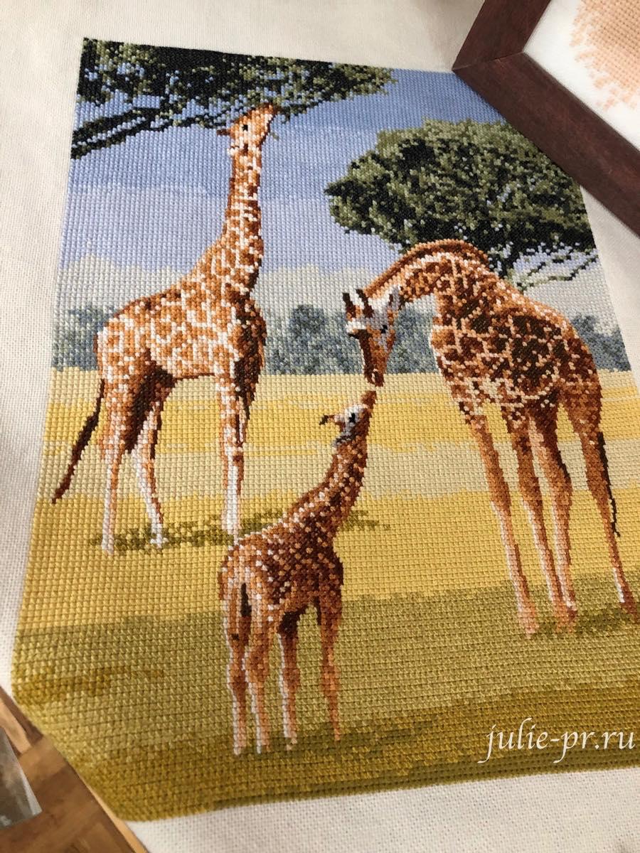 Giraffes, Жирафы, вышивка крестом, Heritage, John Clayton, выставка Грани Джона Клейтона
